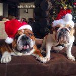 Merry Christmas, Mr. Ecclestone 2015