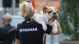 Roscoe, the dog of Lewis Hamilton (GBR) Mercedes AMG F1 at Formula One World Championship, Rd18, United States Grand Prix, Preparations, Circuit of the Americas, Austin, Texas, USA, Thursday 20 October 2016. © Sutton Images